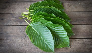 Kratom Issue: Will You Pass a Drug Test after Using a Strain?