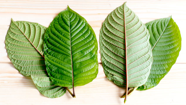 Red Vein Kratom: Features, Sources, Types, and Benefits