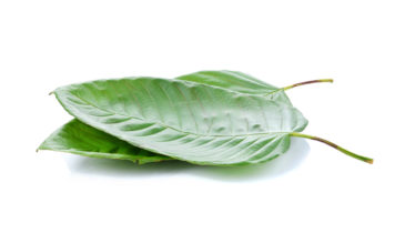 How Do Apps Turn Your Kratom Store Location Into Money