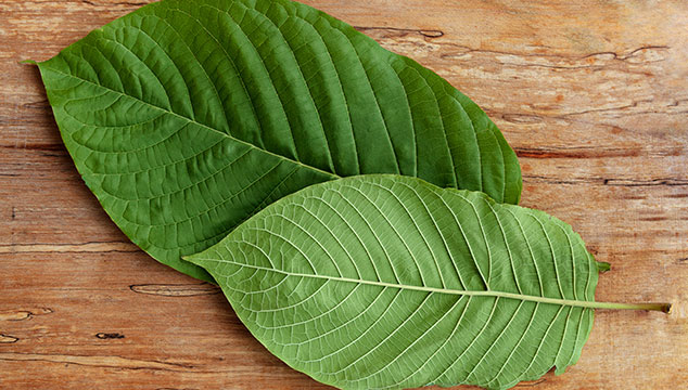 Kratom Vendor: Is Your MIND In The RITE Place?