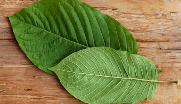 White Vein Kratom as a One-of-a-Kind Herbal Cure for Optimum Health