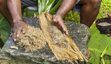Kava Drug Tests: Will Kava Make You Fail It?