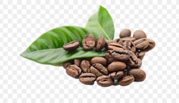 Kratom and Coffee: Can These Two Really Mix or Just Contrast?
