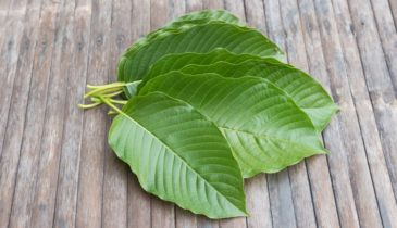 Kratom as Treatment: Best Kratom for Social Anxiety